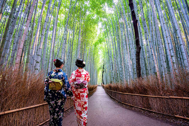 Arashiyama bamboo forest tour in Japan