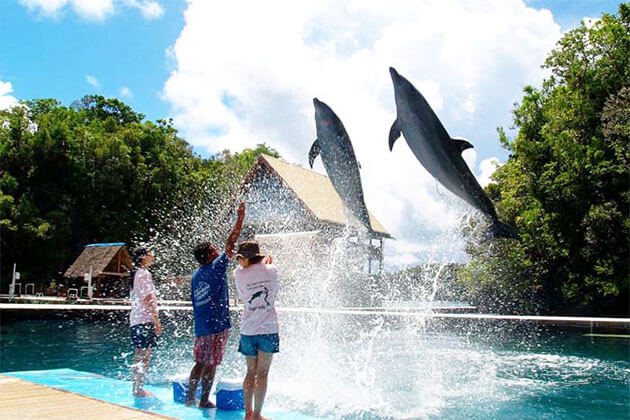 Dolphins Discovery in Taiwan Student Tour