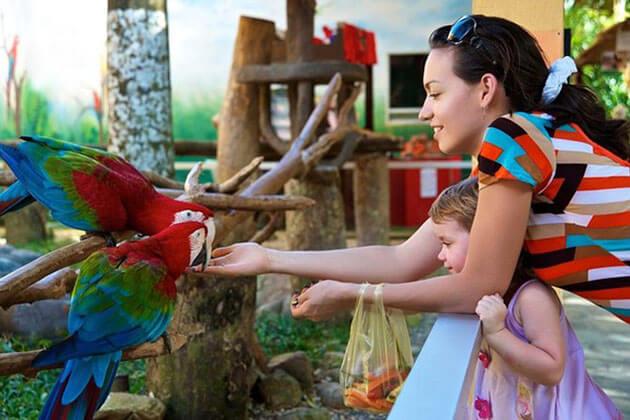 Experience Singapore Jurong Bird Park