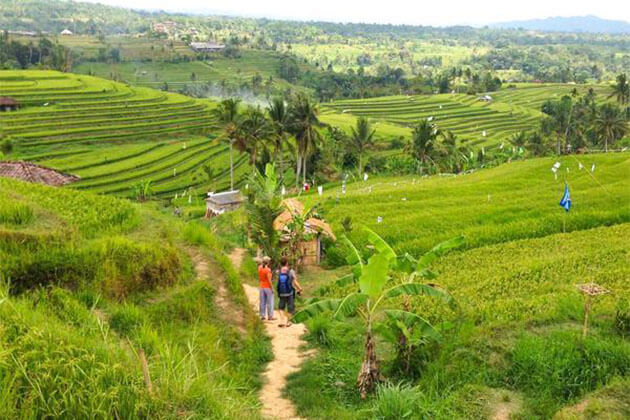 Longji Rice Terraced Fields in Pingan Village