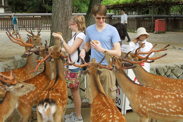 Nara best place to visit for Japan school trip