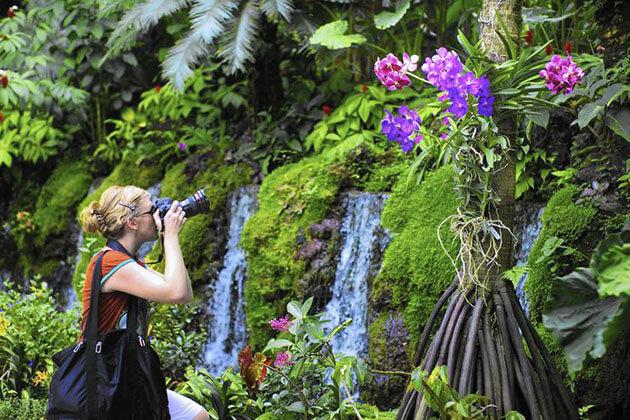 Singapore Botanic Gardens Discovery
