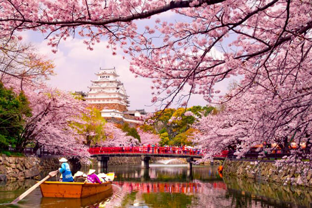 Students of Japan school trip enjoy spring in Japan