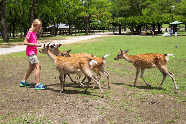 Students visit Nara Deer Park Japan