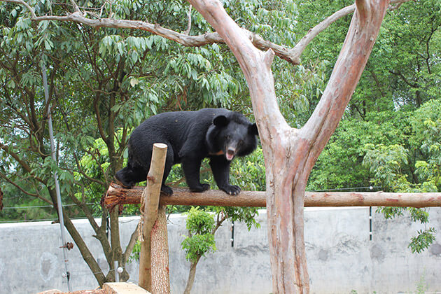 The Bear Sanctuary Ninh Binh