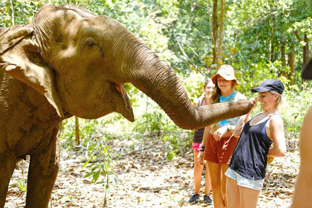 The Mondulkiri Project's Elephant Sanctuary in Cambodia