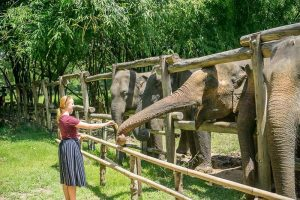 Top 3 Elephant Sanctuaries For Thailand School Trips & Student Tours