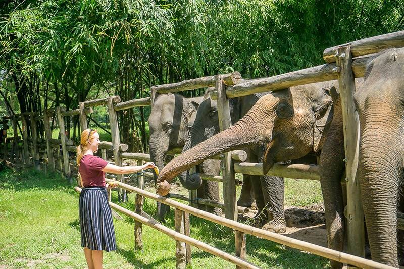 Top 3 Elephant Sanctuaries For Thailand School Trips & Student Tours