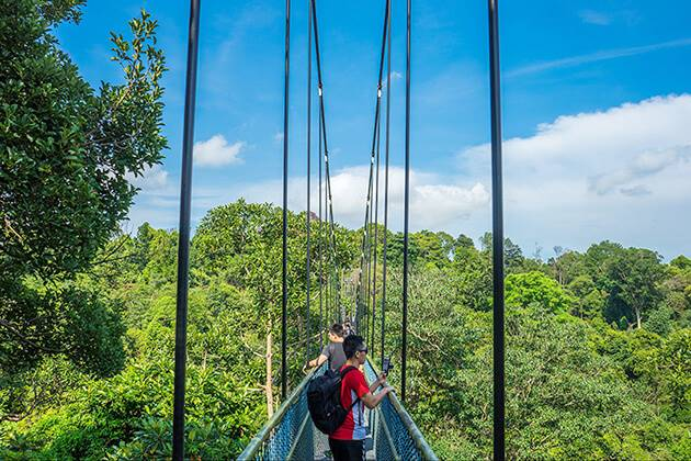 Treetop Walk in Singapore - best spot to visit in chool tour to Singapore