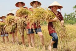 Vietnam North to South Educational School Tour – 8 Days