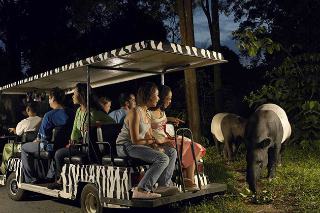 explore the Night safari from school trip to Singapore