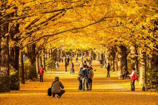 students of Japan school tour package enjoy stunning autumn in Japan