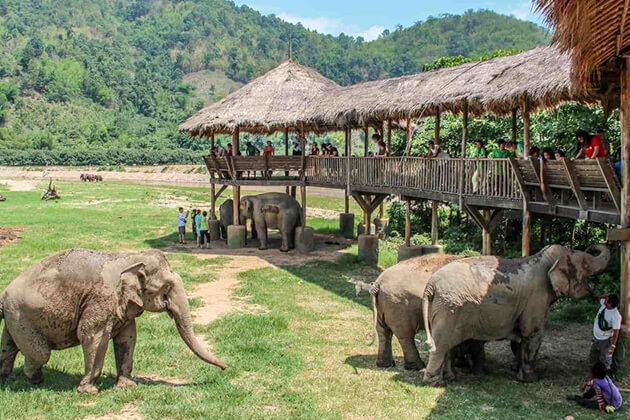visit Chiang Mai Elephant Nature Park in School tour to Thailand